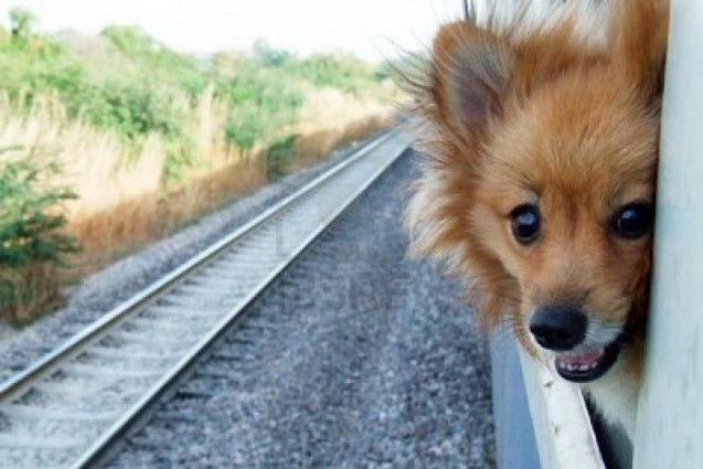 Stories Of Loyal Dogs Who Saved The Day