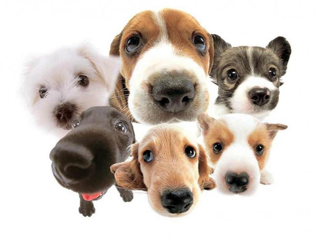 The Family Tree: History and Evolution of Dogs