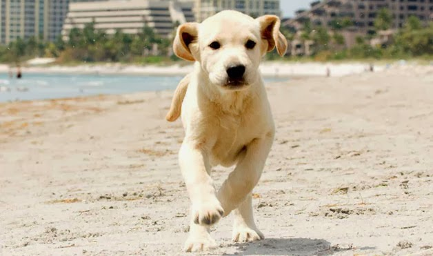 Hollywood Loves Dogs – Dog Movies