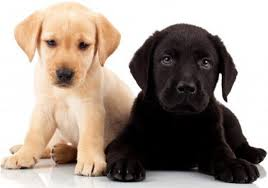 Tips To Pick The Best Puppy