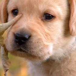 Drool-Worthy Pups To Make Your Day!